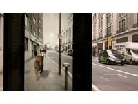 等公車遇見老虎大街散步 英國創意廣告嚇慘民眾