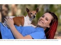 澳洲傑克羅素犬流浪1700公里 心碎主人超興奮