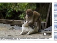 友誼無國界! 貓咪拱背享受猴子幫牠「馬殺雞」