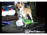 狗狗搶空盒搶輸鸚鵡無奈「遠目」 網友讚臉太有戲!