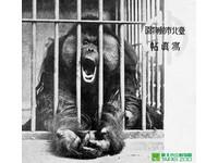 北市動物園100歲了!林旺、圓仔…四代同場