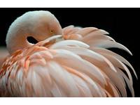 2天發現15具屍體 德國動物園紅鶴慘遭斬首