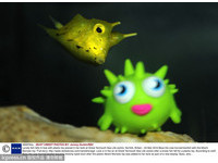 英國超萌「粒突箱魨」太寂寞 把塑膠魚當同伴玩親親