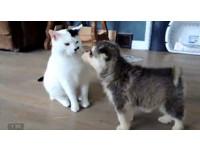 陪我玩嘛!小狗對貓一見鍾情 緊黏貓咪樂當跟屁蟲