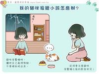 iPet愛寵物/家裡的貓貓很膽小怎麼辦?