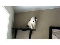 貓界最強火鍋王! 狂搧主人進攻球