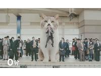被大貓叼著去上班? 網友讚樂天口香糖新廣告超療癒