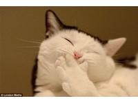 【圖】得意的笑 古錐的動物 爆笑畫面大集合!