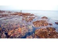 小琉球潮間帶生態被踩壞 擬設保護區限制人數參觀