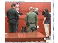 法庭傳喚唯一目擊「證狗」 拉不拉多見疑犯揮棒退縮