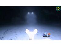 紅外線攝影機拍野鹿 驚現UFO也在拍
