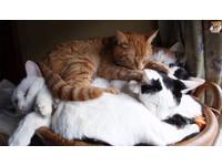 滿出來啦!「竹籃貓」一家5口硬塞籃子擠著一起睡