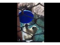 北極熊幫遊客撿飛盤 空拋還人揪感心耶!