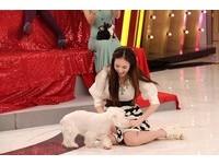 愛犬壞習慣愛吃大便 林采緹親完牠再吻男友!