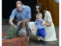威廉逛動物園餵長頸鹿受驚 喬治小王子見袋狸好興奮