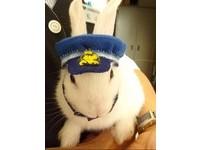 日本萌兔奇蹟    「白兔站長」拯救廢鐵道起死回生