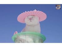 超萌貓叔夏日防曬妙招 頭頂洗髮帽外出