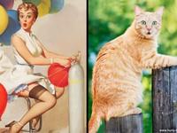 相似度百分百的美麗畫報貓女郎