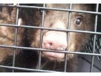 美國超萌小黑熊咬傷14名學生 以為染狂犬病差點安樂死