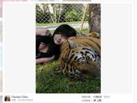 「猴抓妹」誤闖森林遇猛獸 雙乳一露老虎瞬間軟下去