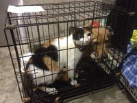 情侶分手寵物遭殃 「臘腸狗三色貓」被丟包台鐵松山站