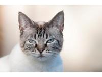 討厭抱抱! 貓咪不喜歡「被抱」的3大原因...你臭臭的