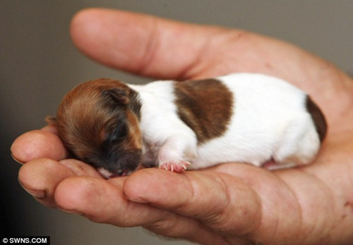 世界最小的狗 吉娃娃傑克比手掌還小! | ETtoday國際新聞 | ETtoday 新聞雲