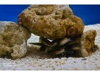 海生館「鰻鯰」 愛上擁擠的安全感