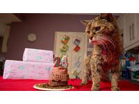 世界紀錄最老的貓! 24歲的「罌粟」仍在家當老大