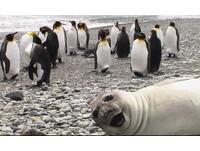 萌之對決 全球5大最棒動物自拍照出爐