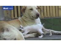 峇里島母狗痛失愛子 領養流浪小貓