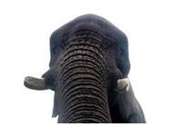 愛瘋掉了被大象拿去自拍 英男:第2張角度抓得不好!