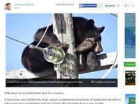 加拿大黑熊爬電線桿躲狗追 在上面安穩睡午覺