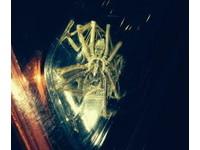 頭皮發麻!  異形蜘蛛可能在你家車子裡趴趴走!