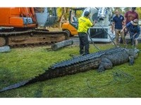 澳洲5米巨鱷「移民」杜拜購物中心 「女友」一起去
