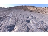 土庫曼「恐龍高原」 2500腳印化石屬肉食「巨齒龍」