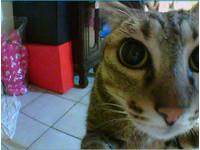 「你在看我嗎?」 裝監視器,汪、喵星人都知道唷!
