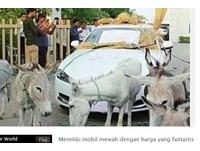 2百萬捷豹跑車頻故障 印度富商乾脆找驢拉車