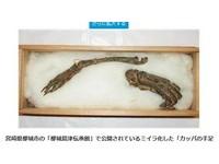 日本宮崎展出「河童的手足」 真的假的看了才知道
