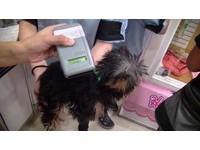 販賣犬隻需先植晶片  北市5家寵物業者違規開罰4萬元