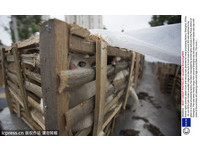 上海卡車載350隻貓被攔下 原要送到假肉工廠製成豬肉