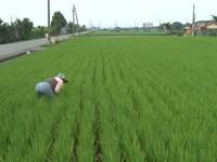 限水休耕犧牲農業? 羅文嘉:農民會有8個月沒收入