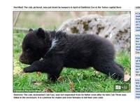 娘不疼爹粗暴 小棕熊被動物園賜死製標本