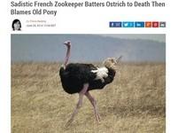 惡劣動物管理員!鐵鏟打死鴕鳥怕被譙 竟嫁禍給小矮馬