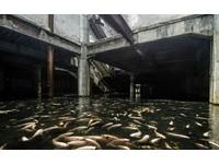 泰國廢墟百貨成都市秘境 驚見上千條錦鯉生存其中