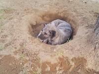 主人搬家忠犬「挖洞住」原地苦等 獲救開心笑了