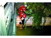 有我在不怕!愛犬落水爬不上岸 重慶男河中托舉2小時