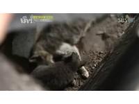 媽媽怎麼不醒來? 孝順小貓留肉給死去母親自己吃土