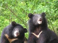 民進黨line帳號上線 預告推出台灣黑熊、小英Q版貼圖