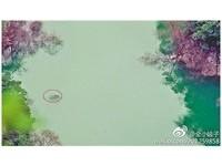 重慶石筍河「水怪」?3米巨魚出沒身旁小魚簇擁